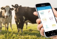 How Data Analytics Is Helping Dairy Farms