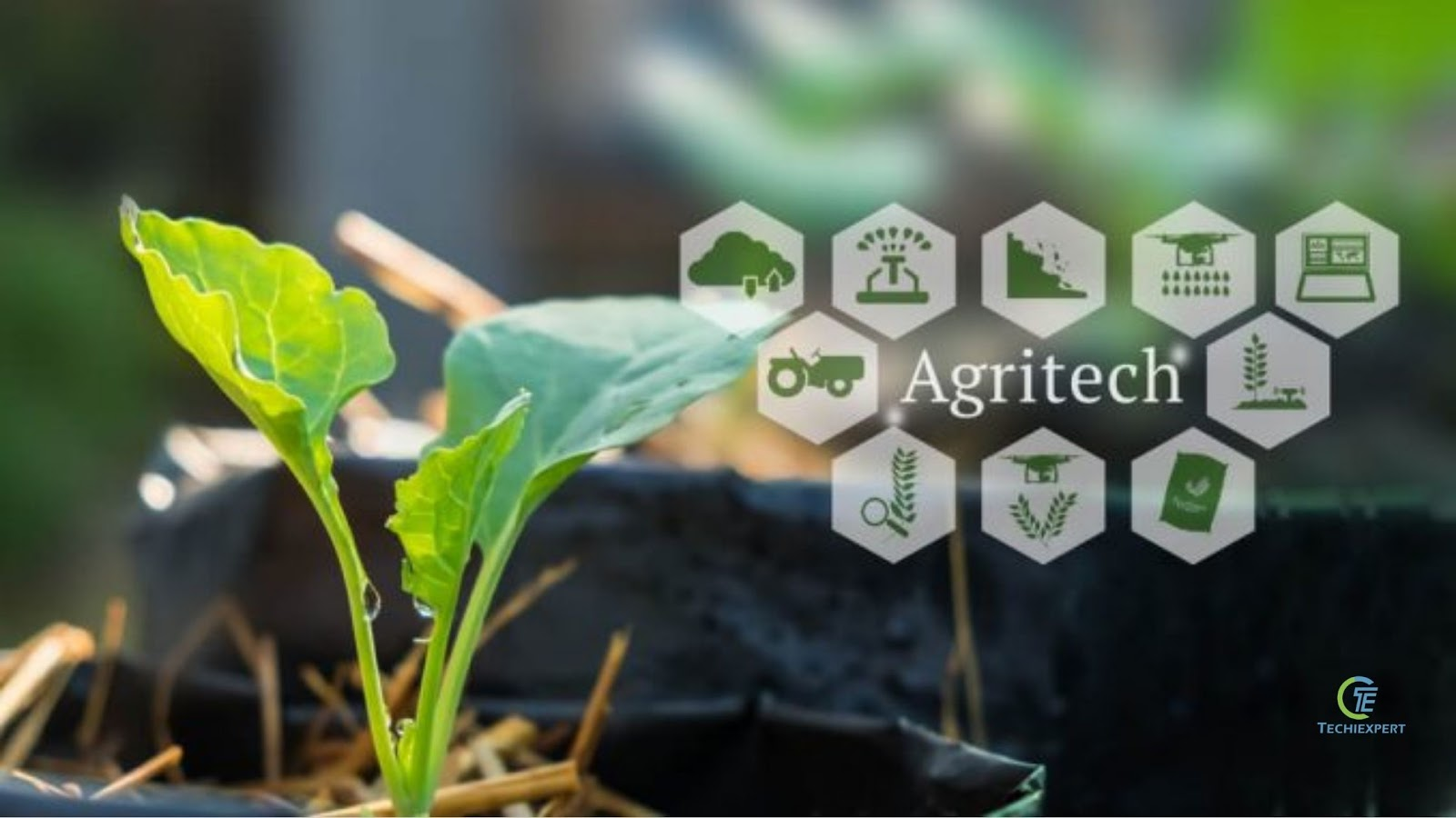 Why Contract Farming Could Be The Next Big Thing For Agritech Startups 4